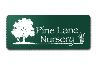Pine Lane Nursery -Great stock of trees and plants. The only garden center we use.